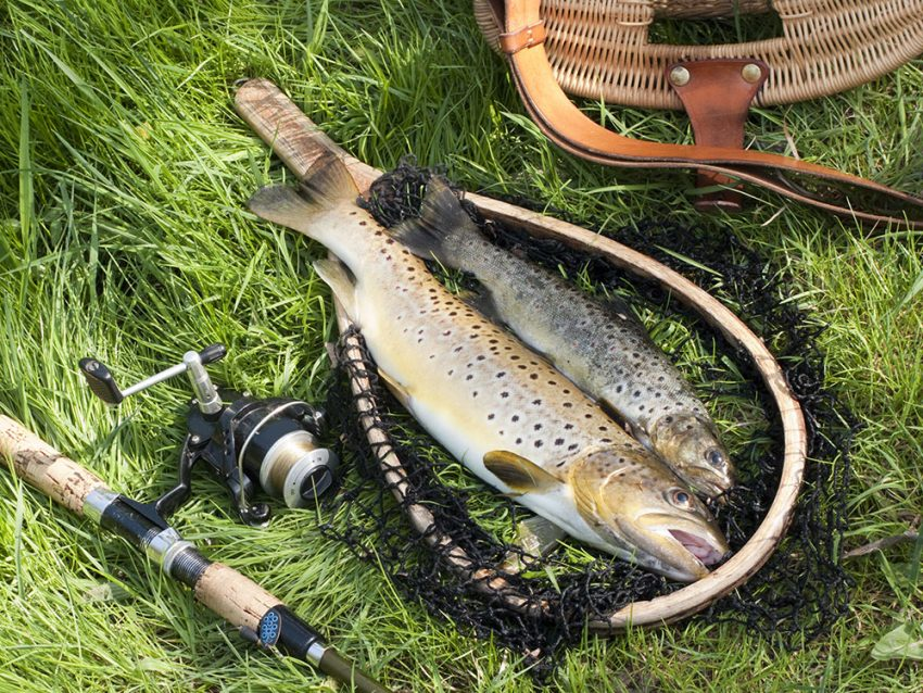 The Trout & Fishing Tools